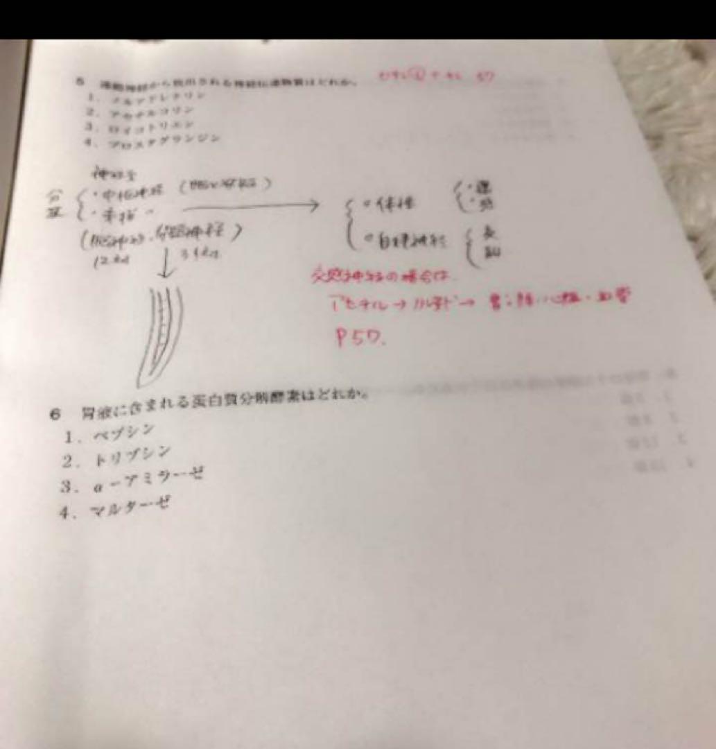 東京 アカデミー 看護