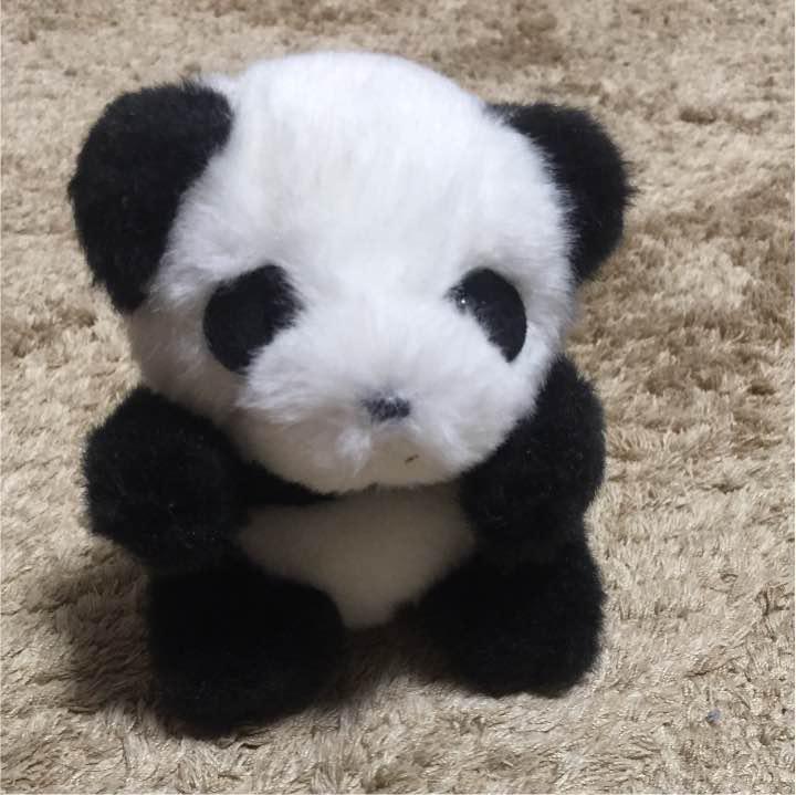 メルカリ 白浜限定 アドベンチャーワールド 赤ちゃんパンダ