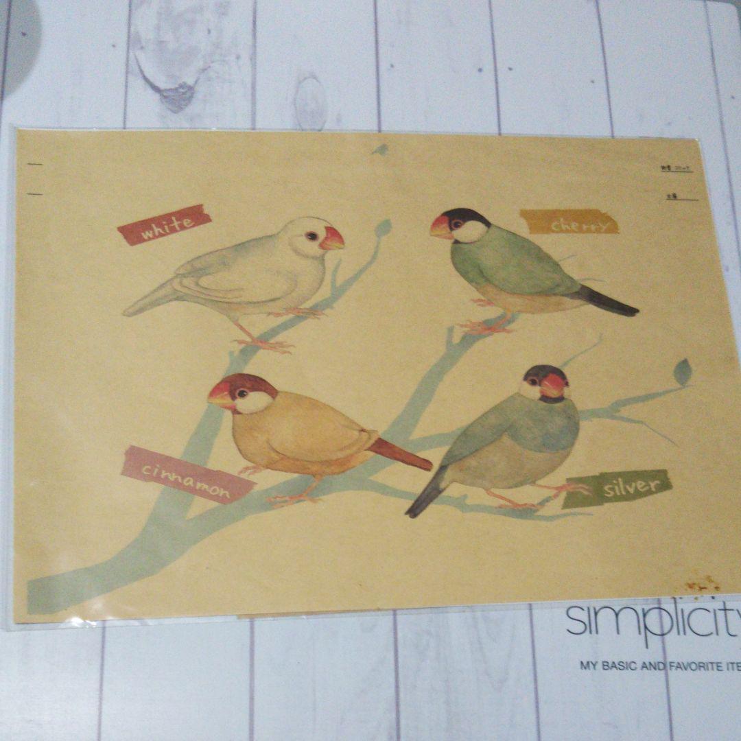 文鳥 シルバー