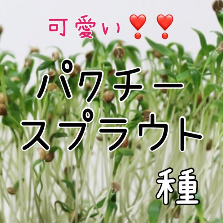 パクチー 水 耕 栽培