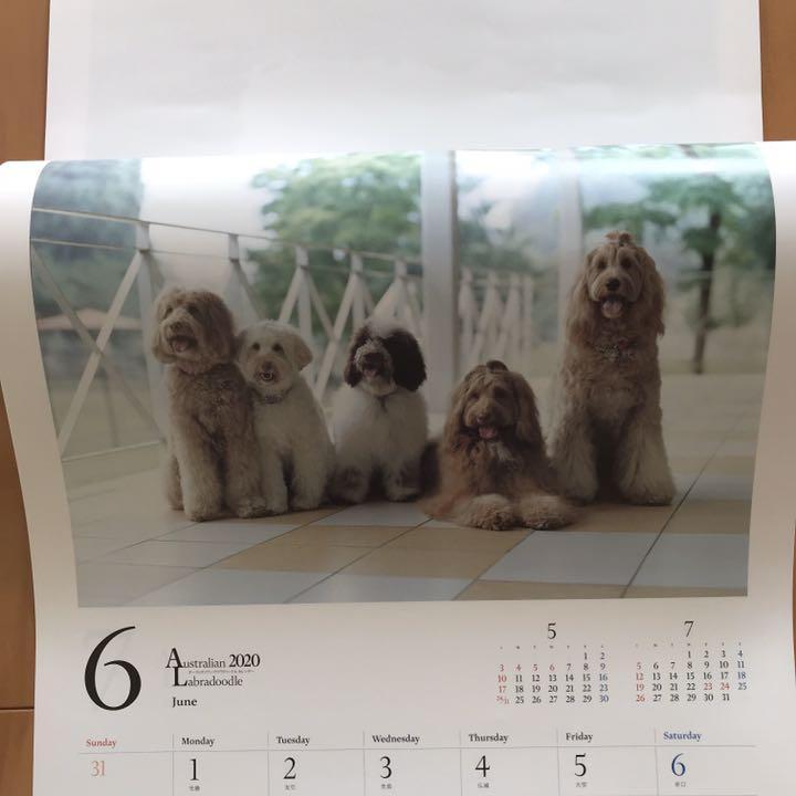 キムタク 愛犬 種類
