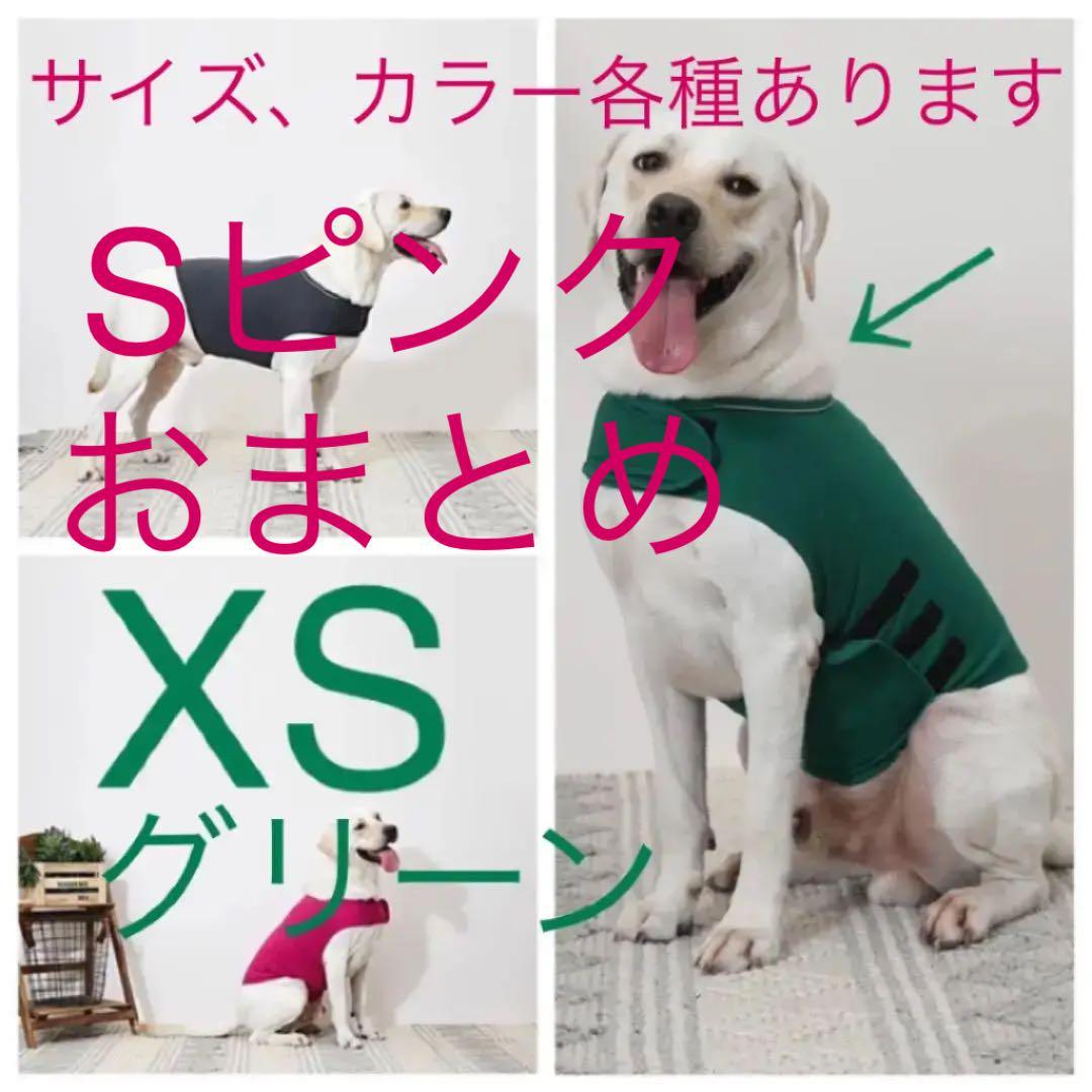 犬 症 分離 不安
